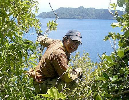 warbird search palau islands bentprop