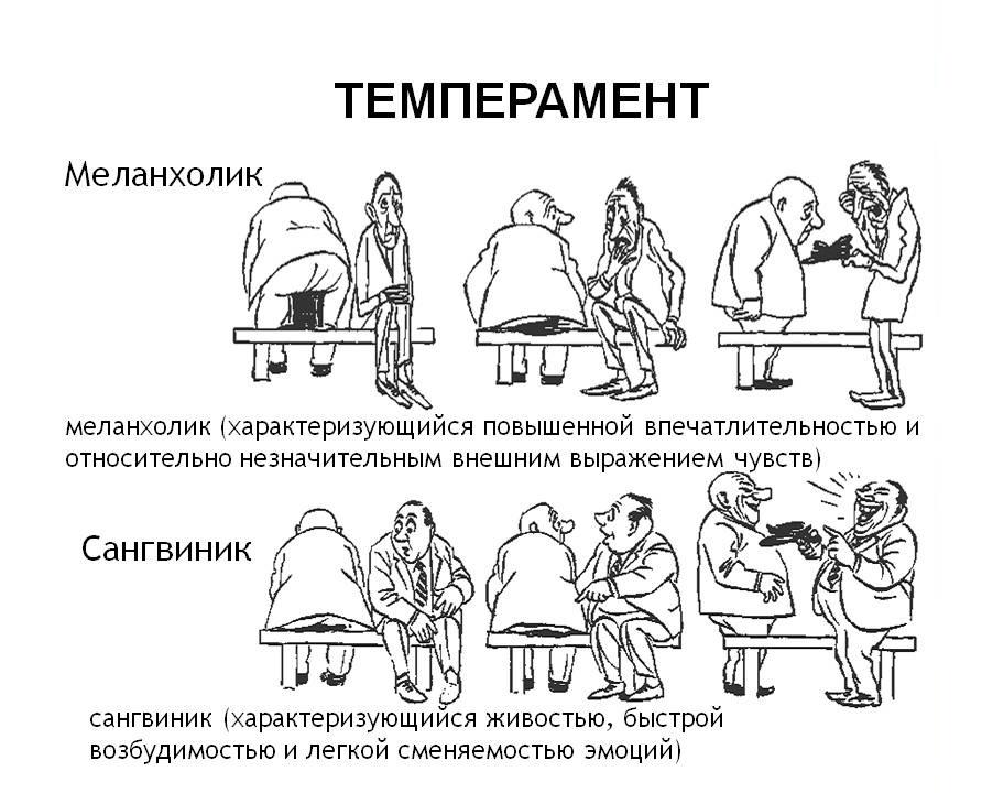 Тип темперамента по картинкам