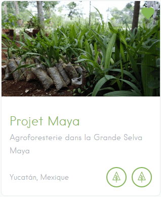 avis projets reforestation agroforesterie