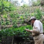 agroforesterie café Bolivie