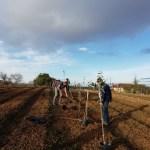 plantation arbres agroforesterie