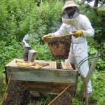 agroforesterie apiculture ghana
