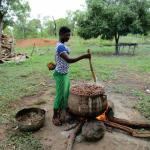 agroforesterie karite ghana