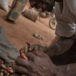 homme cacao cameroun