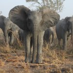 éléphants parc national pendjari benin