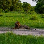 lion parc national pendjari benin