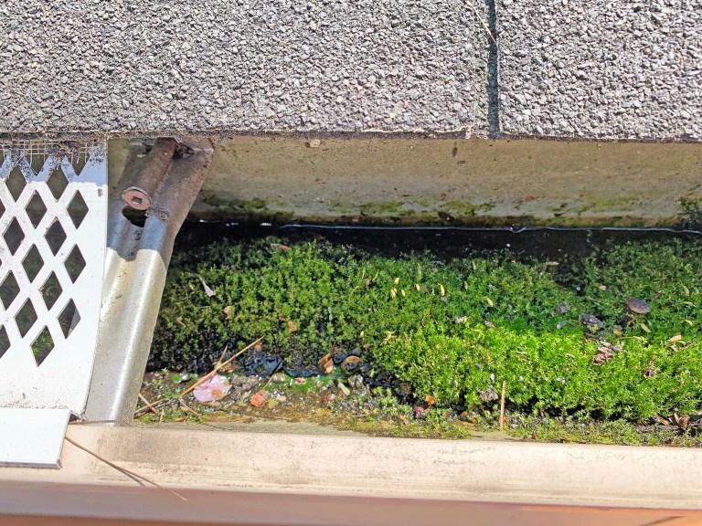 Debris inside a gutter