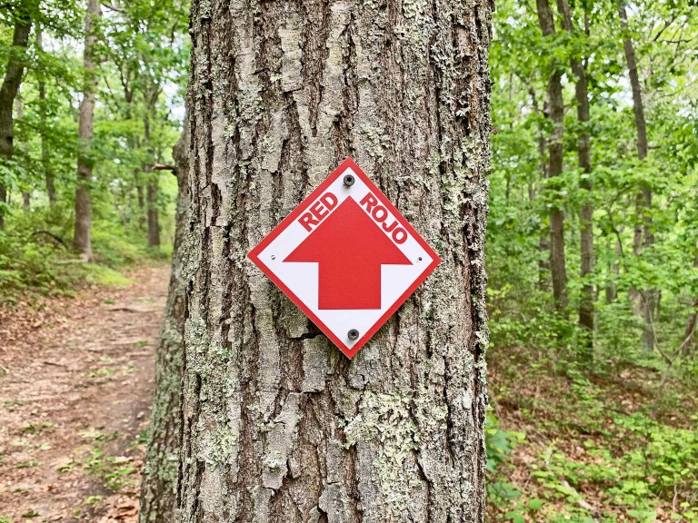 Red trail sign marking nailed to a tree in a forest