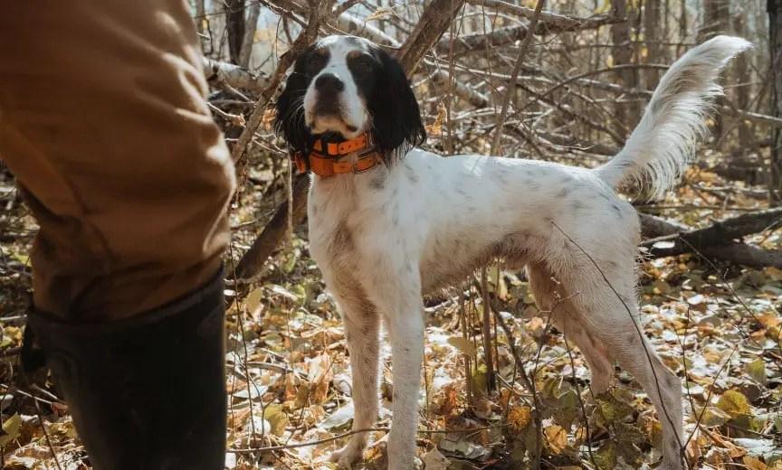Top Three Bird Dog Breeds Of 2019 Project Upland Magazine