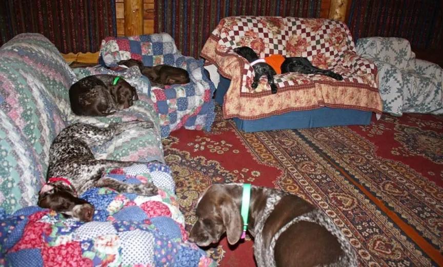 bird dogs sleeping on camp furniture.