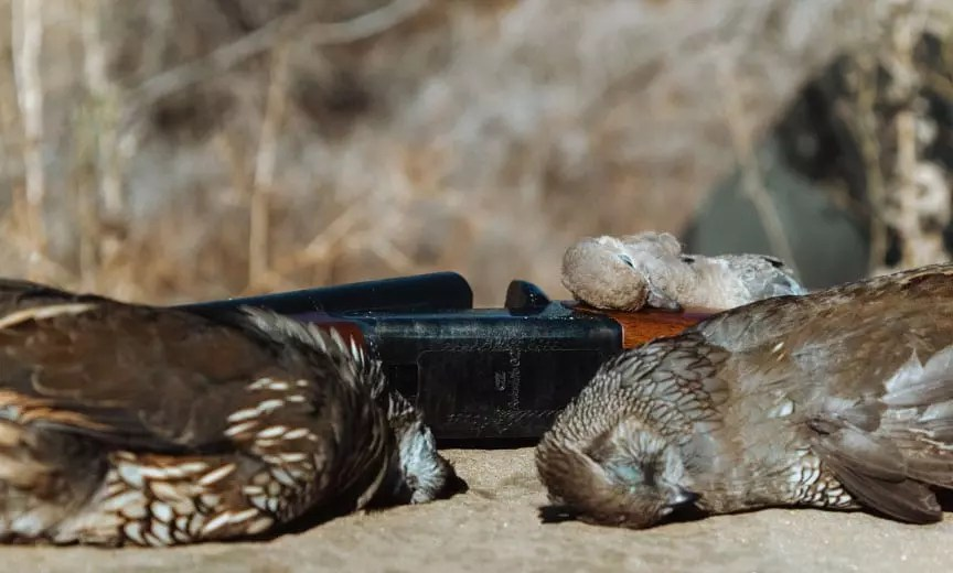 A CZ Bobwhite being used for quail and dove.