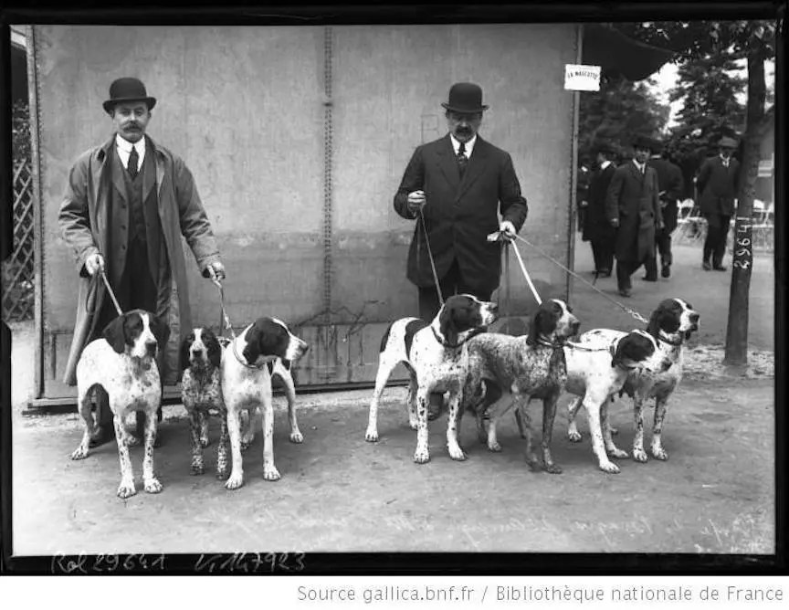 French field trialers with their pointing dogs circa 1920