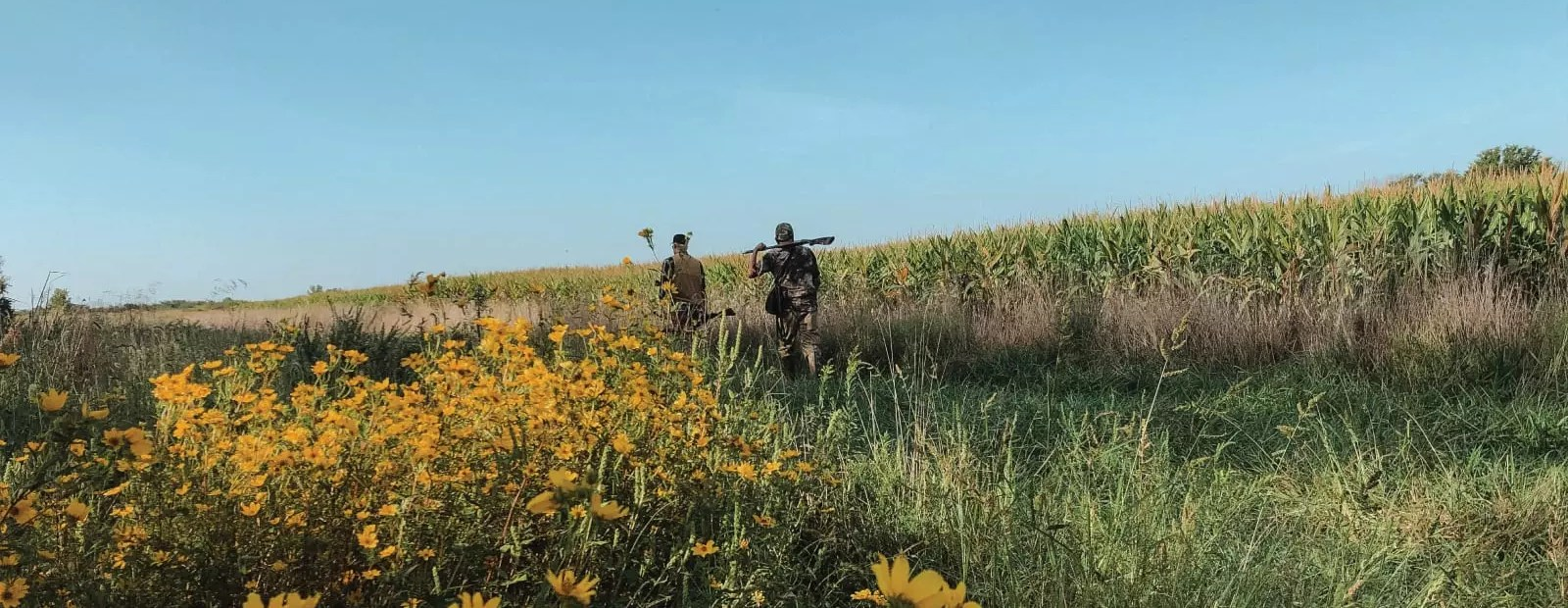 Dove hunters walking into a field.