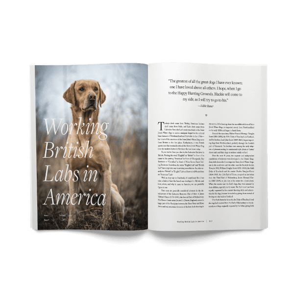 An open spread of Hunting Dog Confidential issue 1.1 with a British lab.