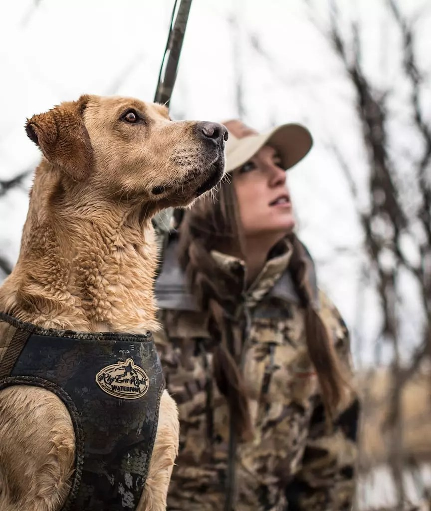 A woman hunts ducks with a yellow lab