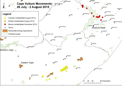 Cape Vulture movements 26/07/2015 - 02/08/2015