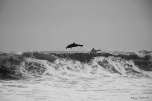 Océan, 364 jours pour vivre sa journée mondiale