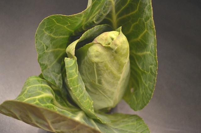 legumes de printemps