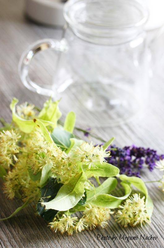 tilleul-bienfait-plante