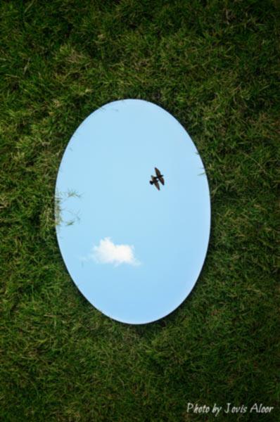 miroir-alouette-oiseau