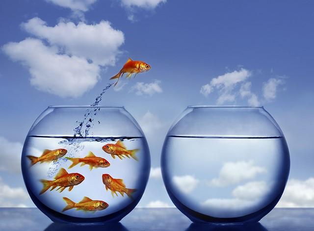 poisson-rouge-stratégie-ocean-bleu