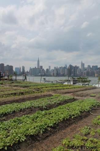 Vue sur Manhattan depuis Eagle Farm
