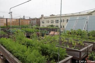 Vue d'ensemble jardin sur le toit
