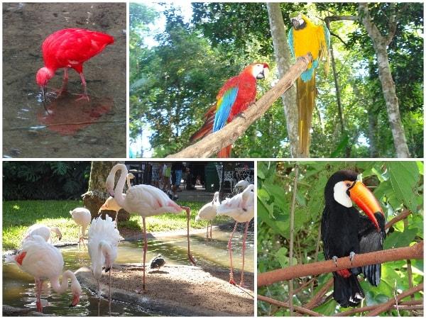 Parque das Aves Foz do Iguacu