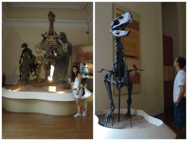 Nosso contato com os dinossauros