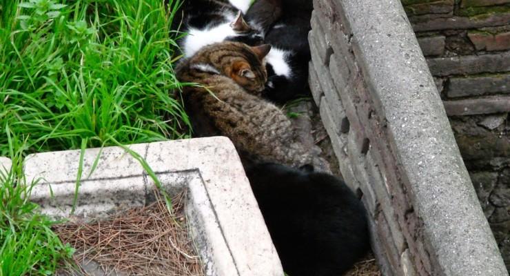 Gosta de Roma? E de gatos?
