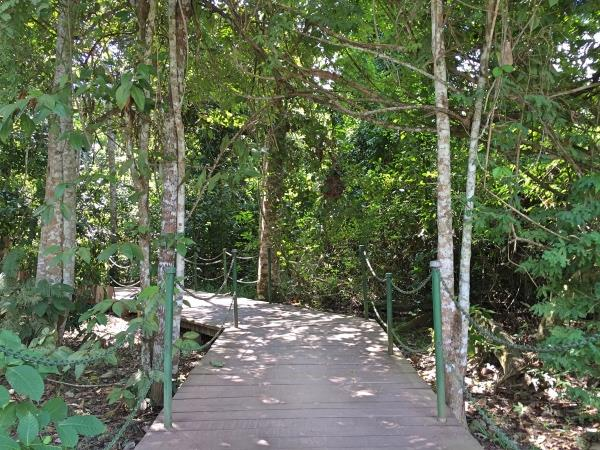 Vegetacao Parque Chico Mendes