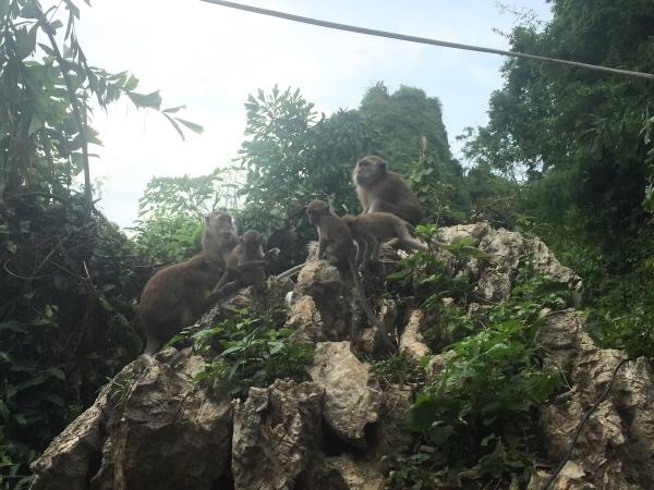 macacos-em-railay-beach