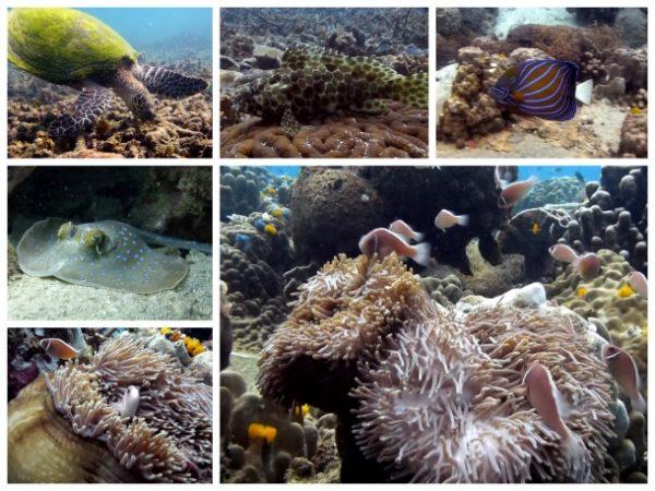 Vida marinha em Koh Tao