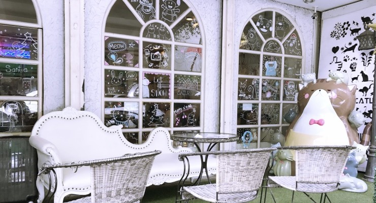 Caturday: o lindo cat café em Bangkok