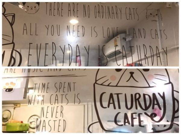 Frases do Caturday