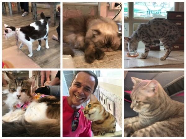Gatos no Caturday em Bangkok