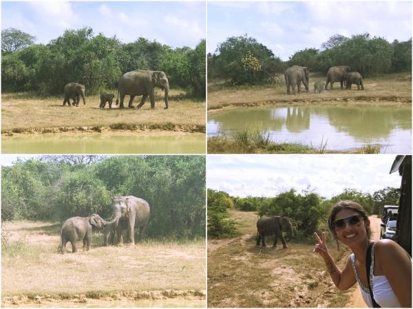Elefantes no Yala National Park