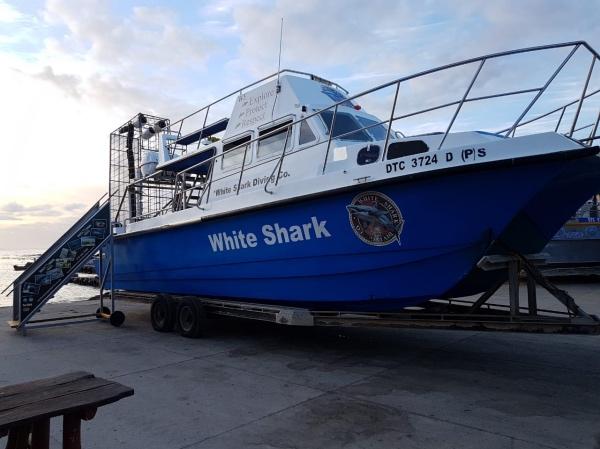 Barco do mergulho com tubarão branco