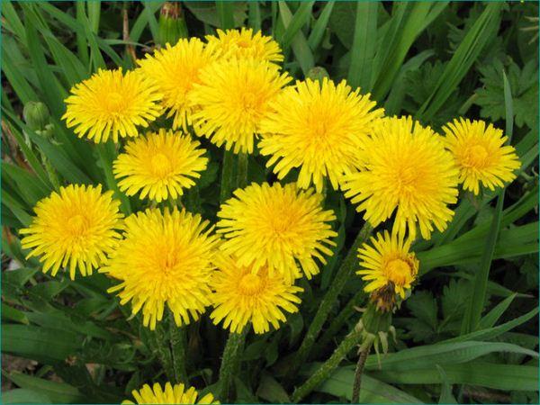 10 красивых желтых цветов: названия, описание, уход ...