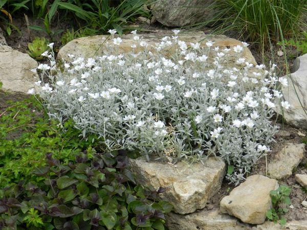 Какие культуры можно выращивать на каменистой почве?