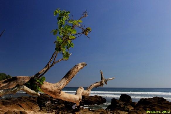 Panorama dan suasana pantai Wediombo ini ngangenin bangett..