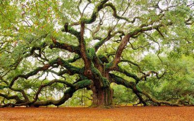 L'analyse par arbre de décision – Exercices corrigés