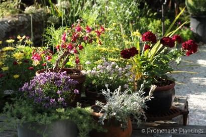 July flower pots