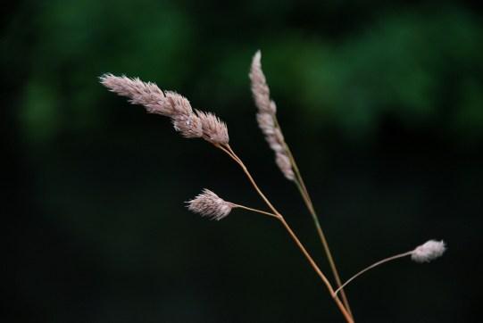 ©P.Romero: Meadow Grass, Hampshire, UK (2013)