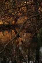©P.Romero: Winnall Moors, Winchester, UK (2017)
