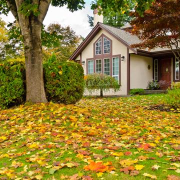fall lawn pest