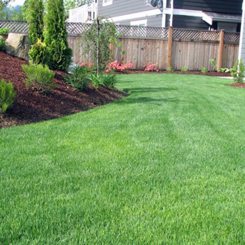 grow thick green grass