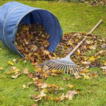 november lawn care tips