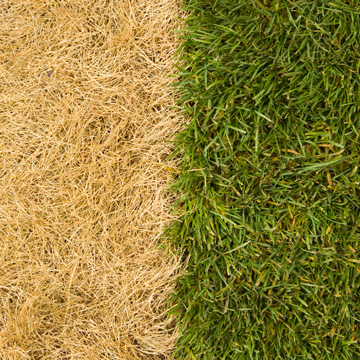 prevent grass from turning brown