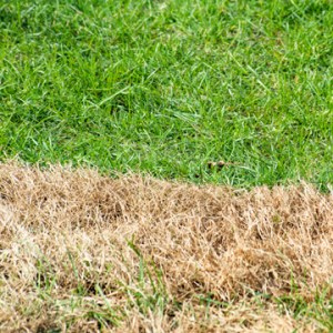 recover your lawn this fall